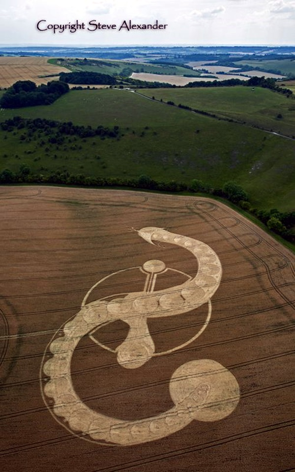 Another World Crop Circle Arts Drawn by Humans (17)