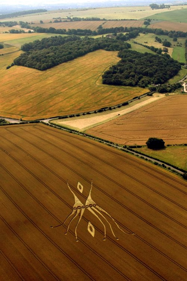 Another World Crop Circle Arts Drawn by Humans (26)