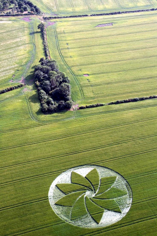 Another World Crop Circle Arts Drawn by Humans (4)
