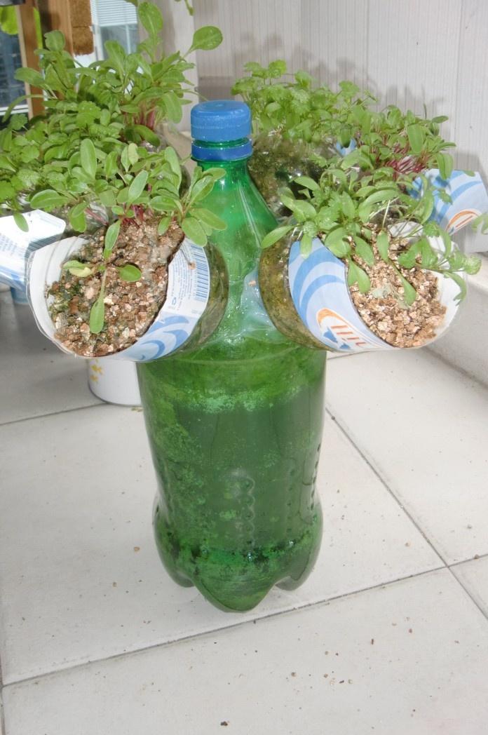bottle garden 20