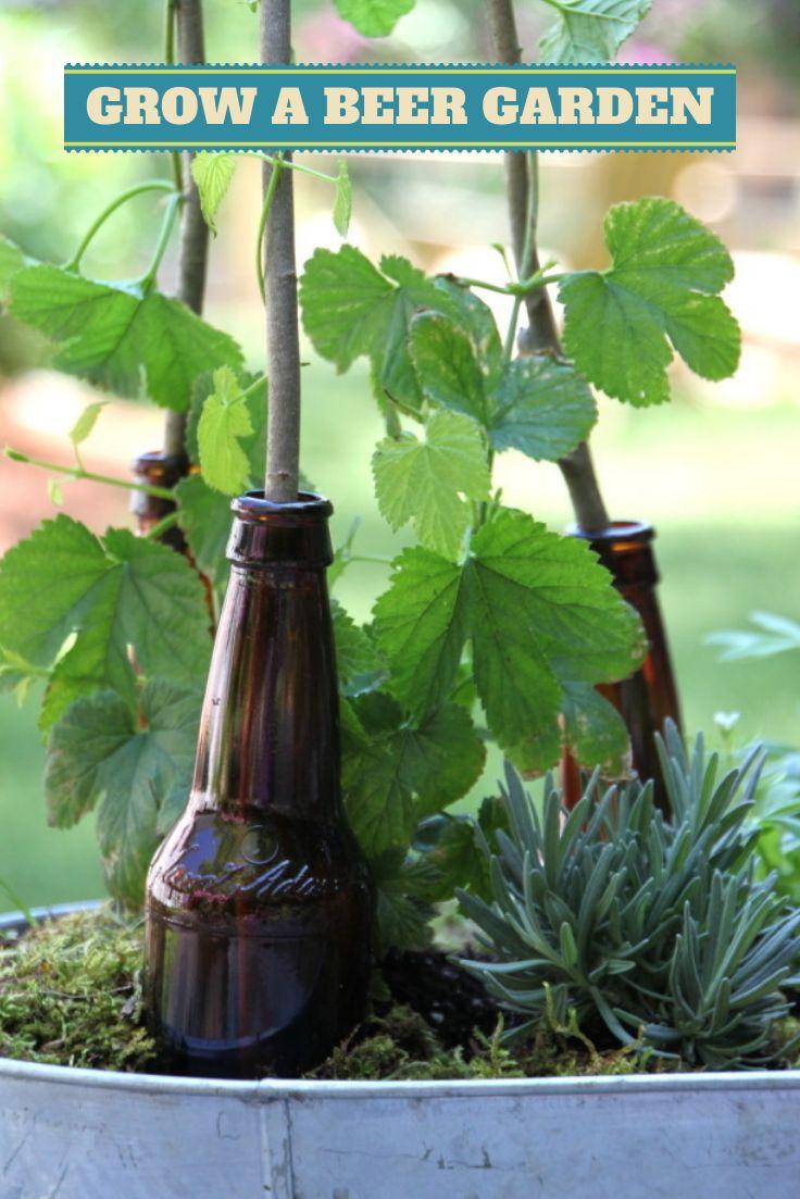 bottle garden 5