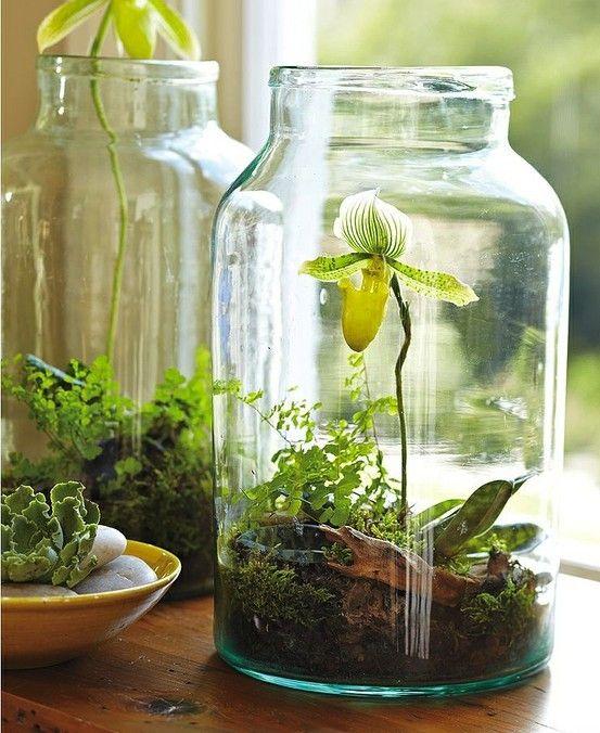 bottle garden 6