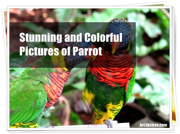 Pictures of Parrots (24)