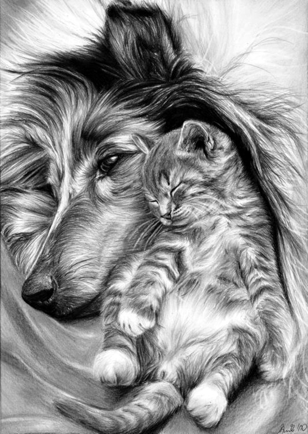 Realistic animal pencil drawings 11