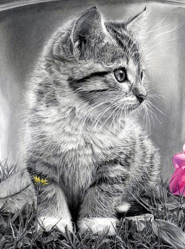 pencil animal realistic drawings