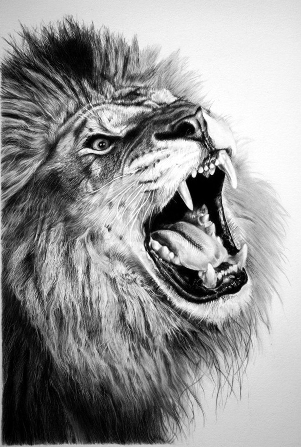 Realistic animal pencil drawings 21