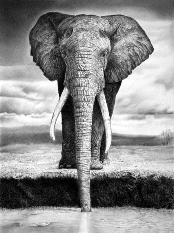 realistic animal drawings pencil