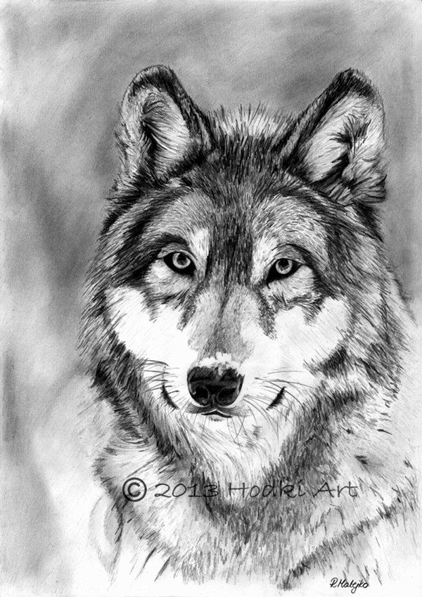 pencil wolf realistic animal drawings drawing animals portrait etsy sketches draw wild portraits graphite 3d wolves dog charcoal von 8x12