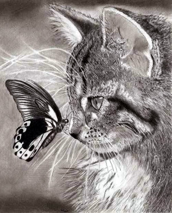 Realistic animal pencil drawings 28