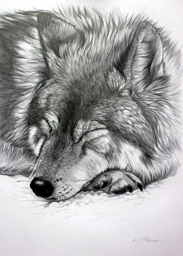 Realistic animal pencil drawings