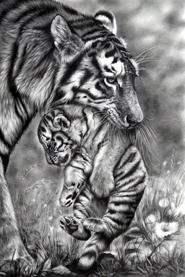 Realistic animal pencil drawings 31