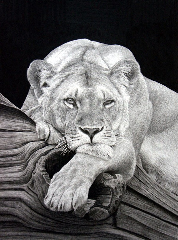 Realistic animal pencil drawings 32