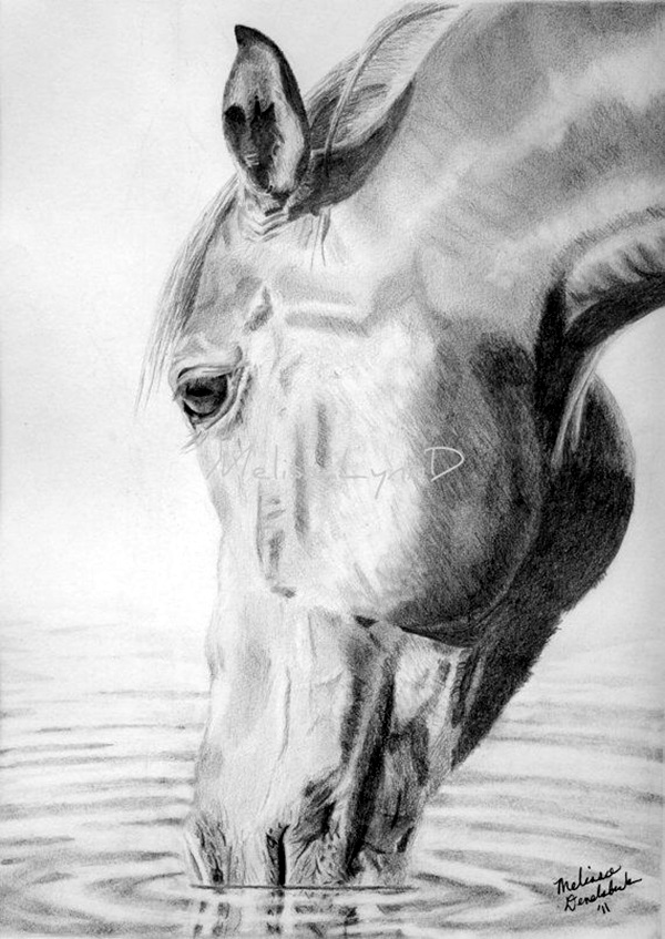 Realistic animal pencil drawings 34