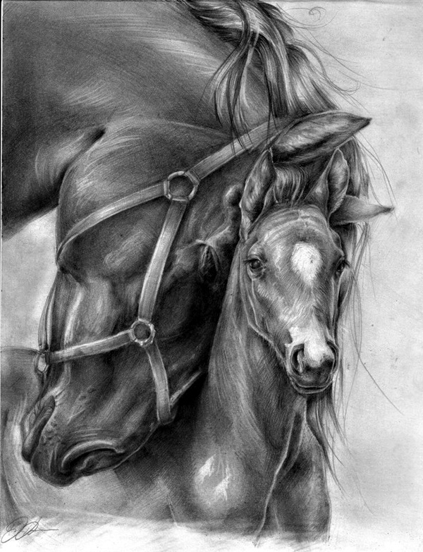 .:Pencil-Rearing Horse:. by PeaBlueJr on DeviantArt  |Horse Art Drawings