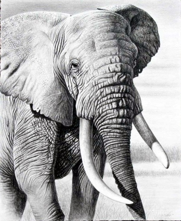 Realistic animal pencil drawings 37