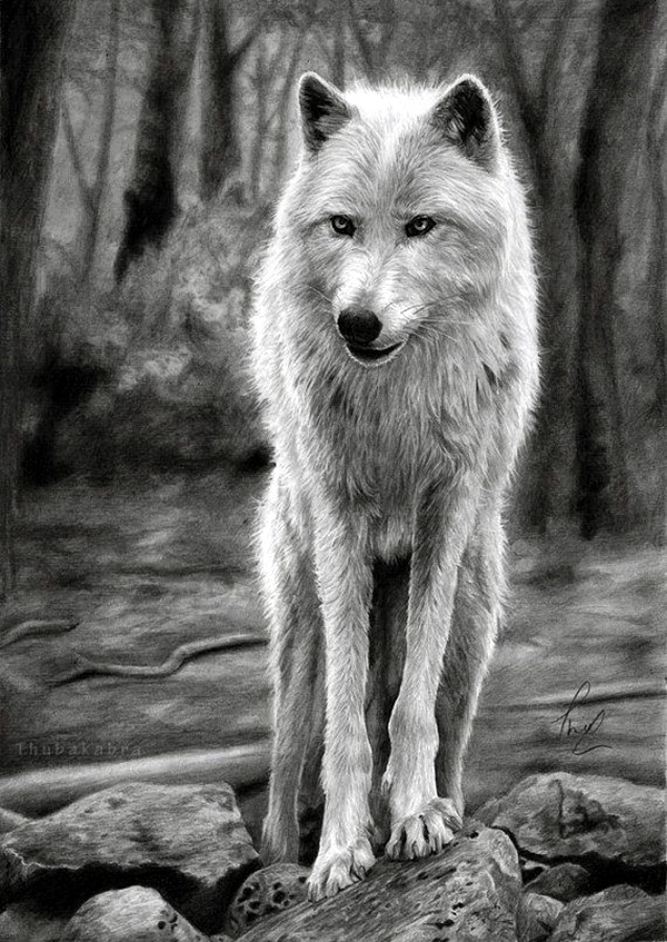 realistic drawings wolf pencil animal drawing forest wolves animals horse thubakabra print graphite background sketches draw artwork charcoal poster wildlife