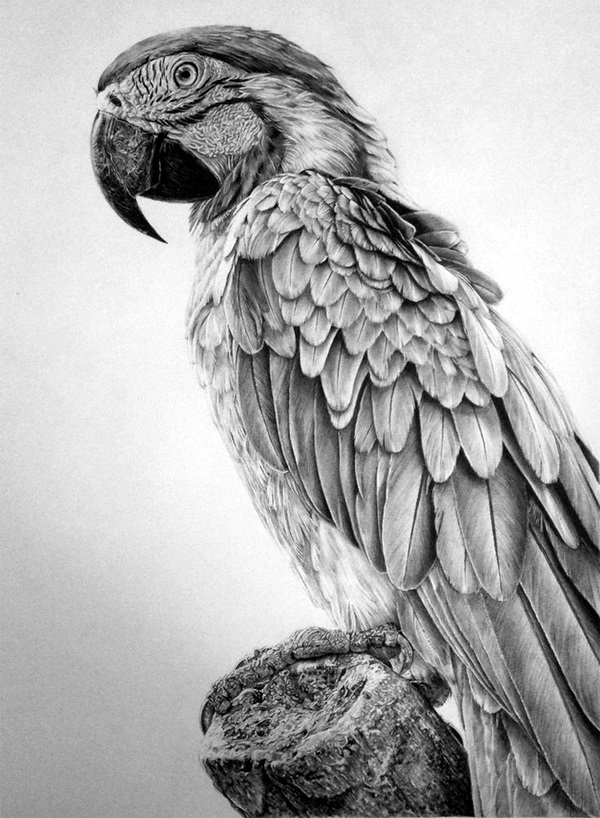 Realistic animal pencil drawings 8