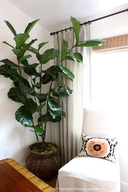 Indoor Plant Ideas A Green Touch
