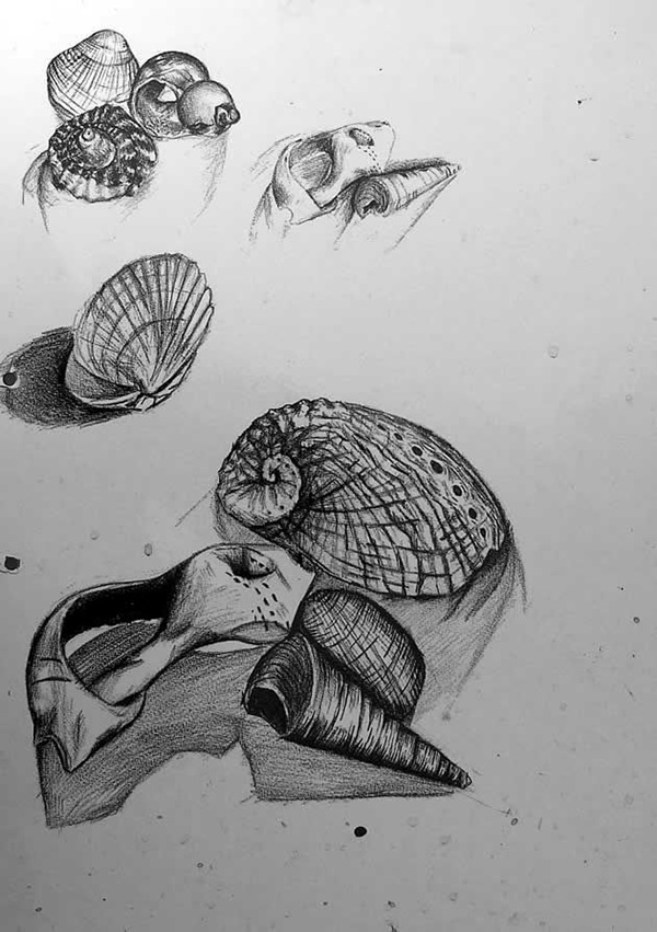40 Excellent Observational Drawing Ideas Bored Art