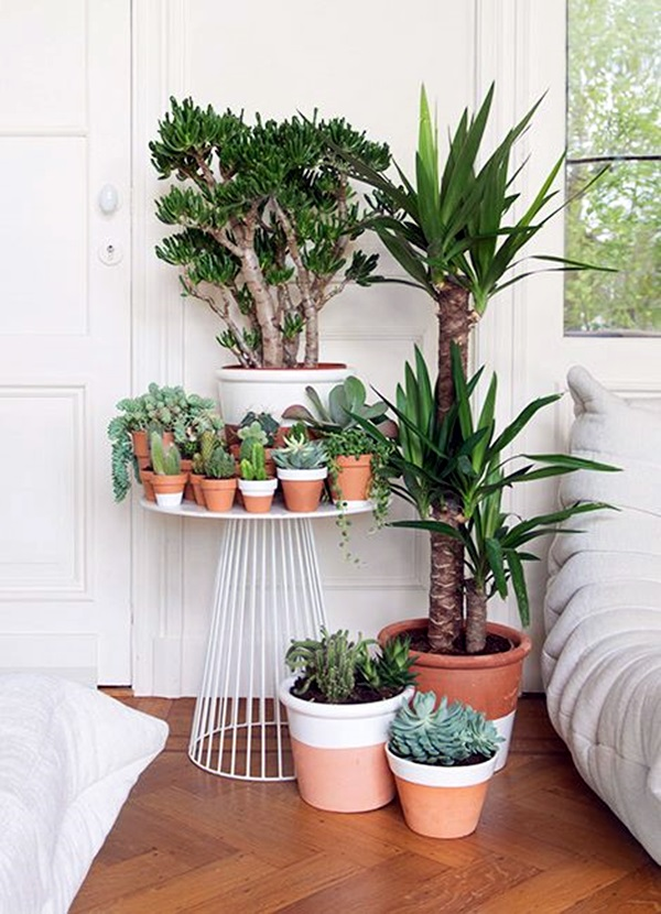 Wonderful Indoor Gardening Ideas Part - 5: Smart Mini Indoor Garden Ideas