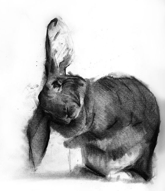 charcoal drawings 13