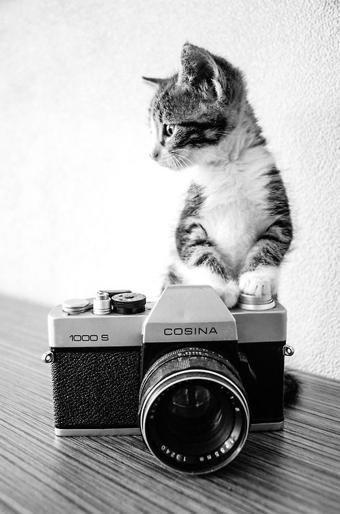 cat photography 22