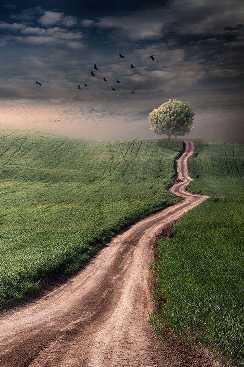 scenic roads photography 12