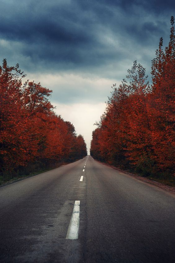 Sensational And Soothing Scenic Road Photography