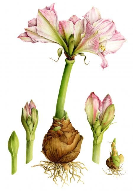 botanical art 15