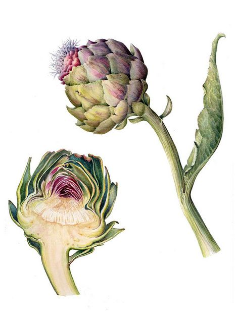 botanical art 16