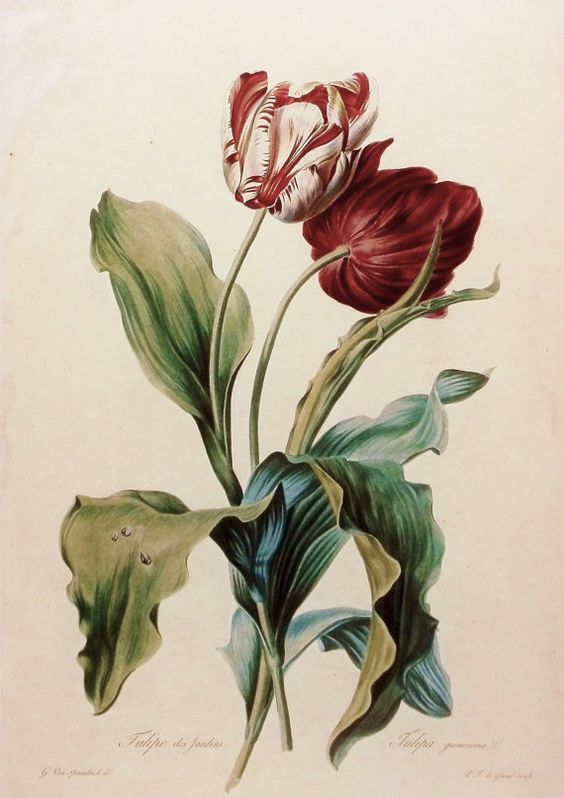 botanical art 18