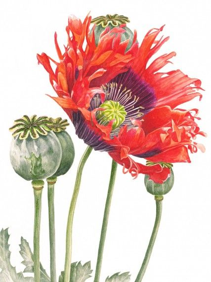 botanical art 21