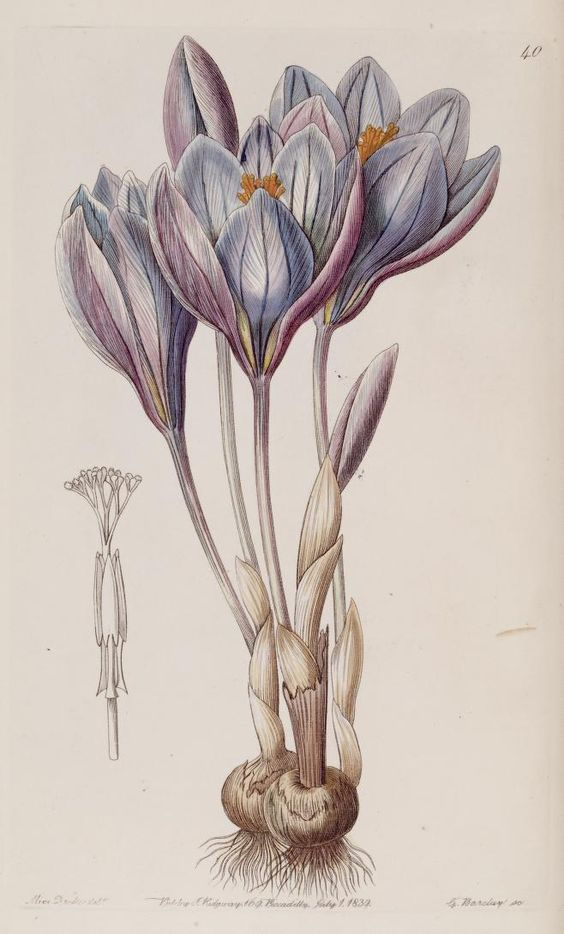 botanical art 23