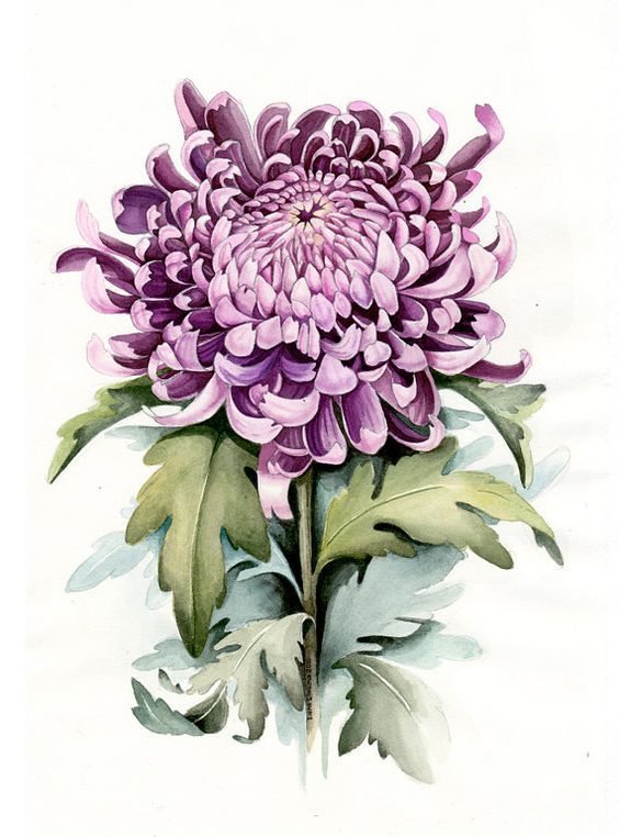 botanical art 25