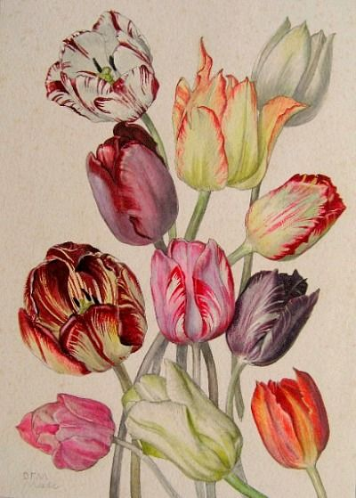 botanical art 34