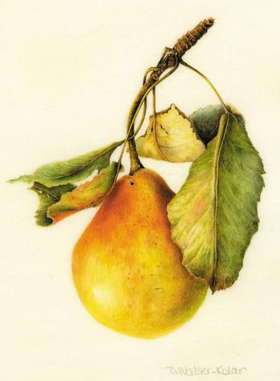 botanical art 36