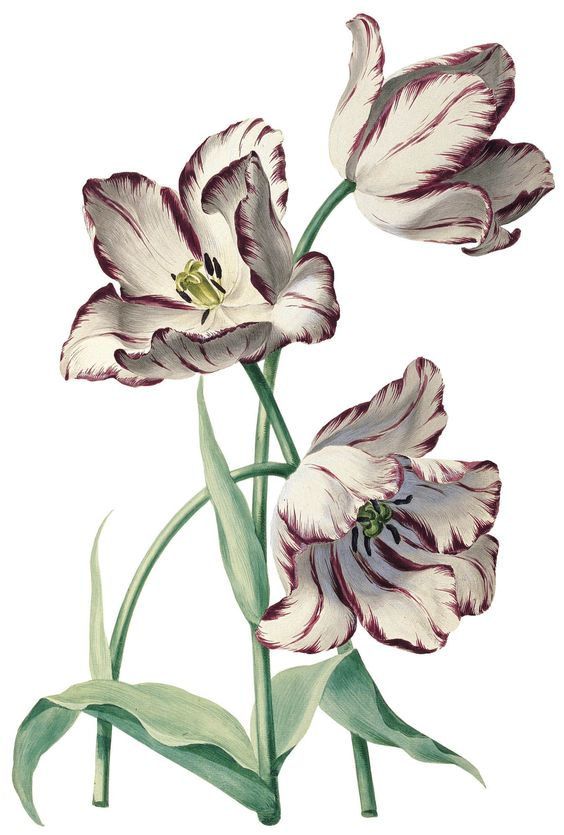 botanical art 37