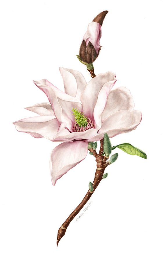 botanical art 49