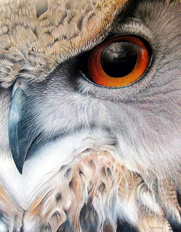 color pencil drawing Examples (16)