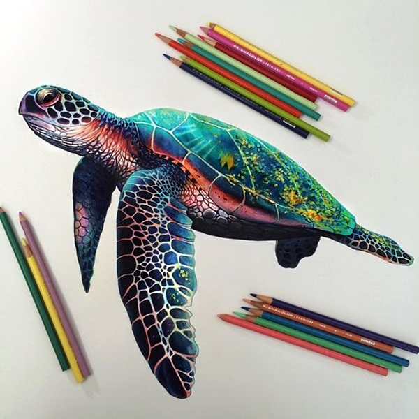 color pencil drawing Examples (21)