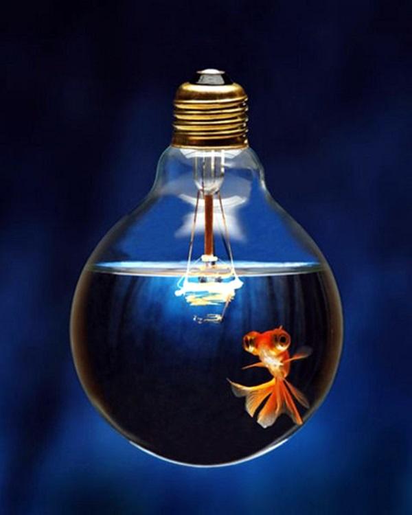 40 Original Light Bulb Aquarium Decor Ideas Bored Art