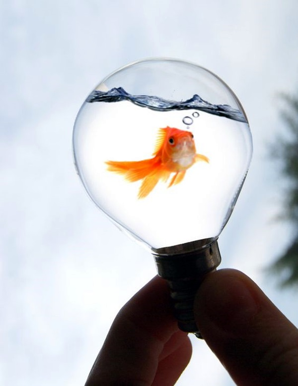 Original Light Bulb Aquarium Decor Ideas (28)