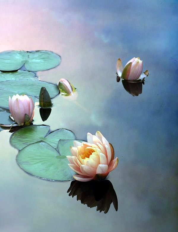 Peaceful Lotus Flower Painting Ideas (4)