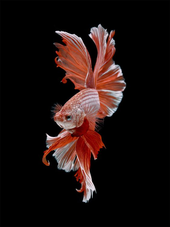 Refreshing fascinating and pretty fish photography for Image of fish