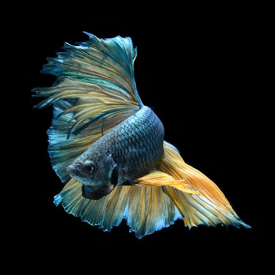fish photography 17