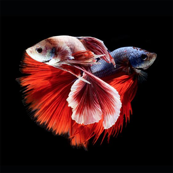 fish photography 18
