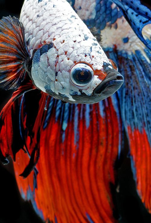 fish photography 2