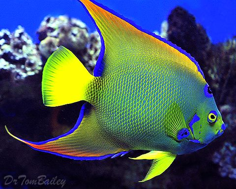 fish photography 26