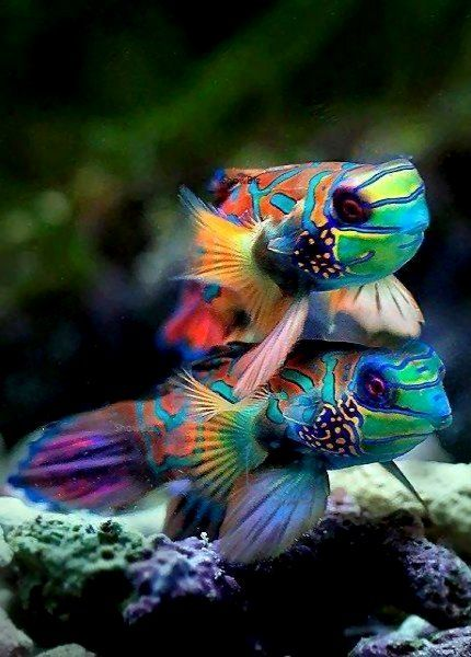 fish photography 27