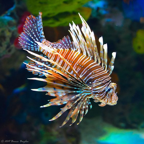 fish photography 8